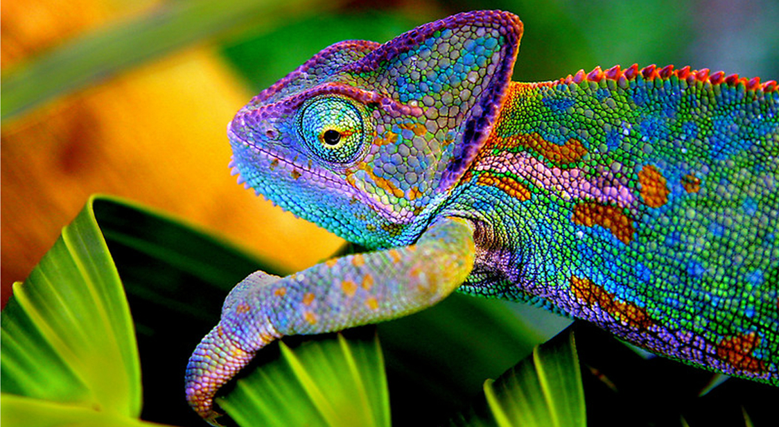 2redbubble.compeoplemasterpiececreationsworks588850chameleon