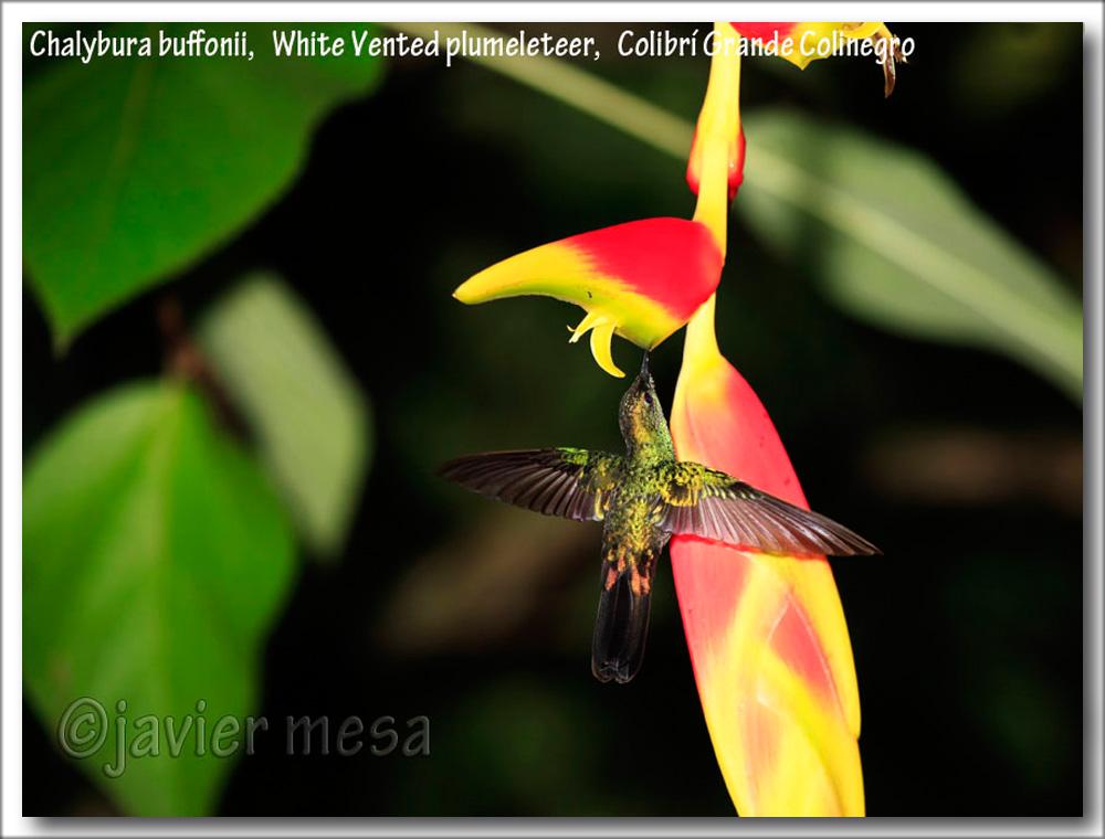 FloresParaAgata2