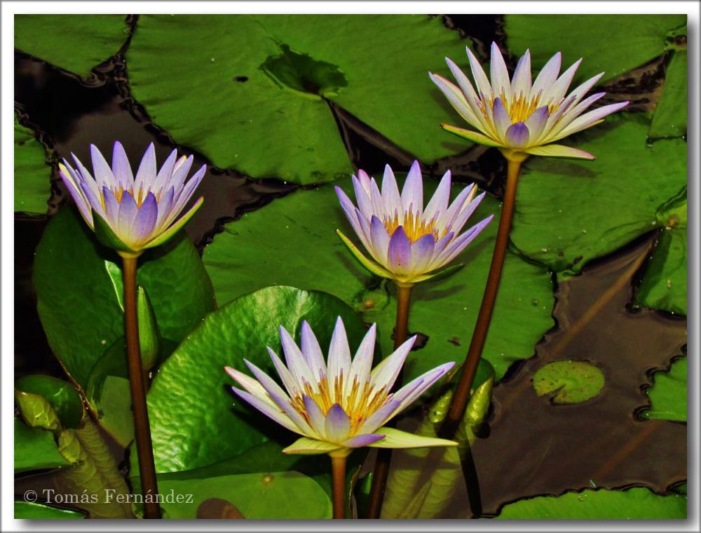 FloresParaAgata3