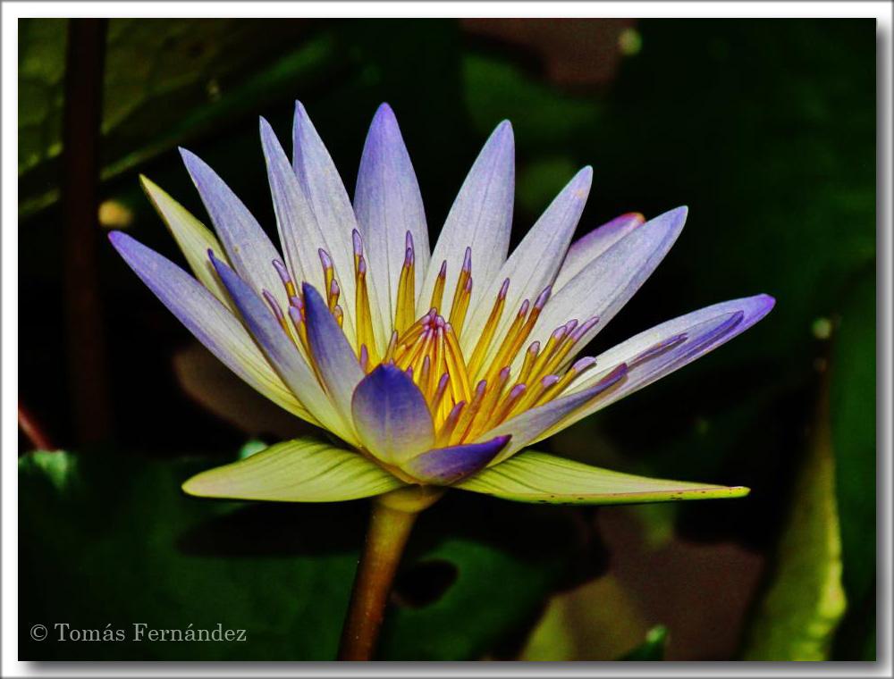 FloresParaAgata4