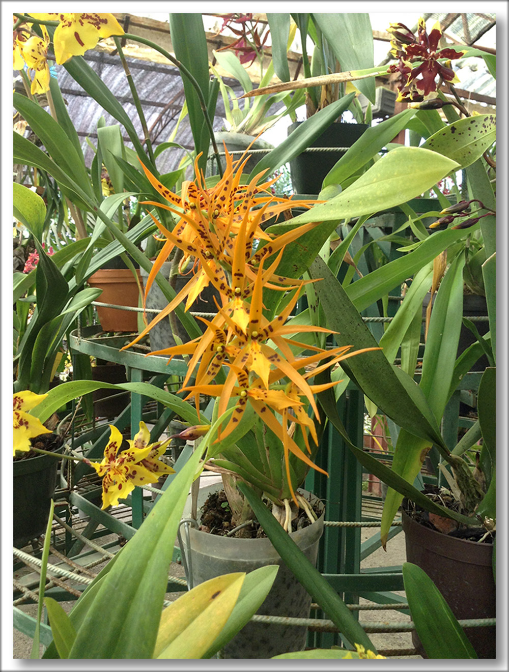PlantioLaOrquidea2