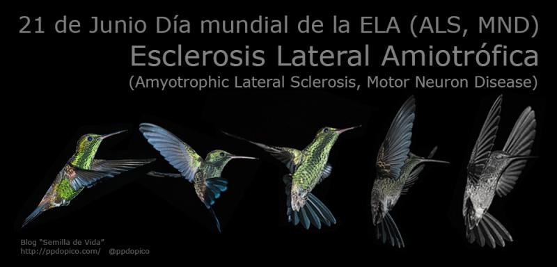 Resultado de imagen para 21 de junio: Día Mundial de la lucha contra la Esclerosis Lateral Amiotrófica