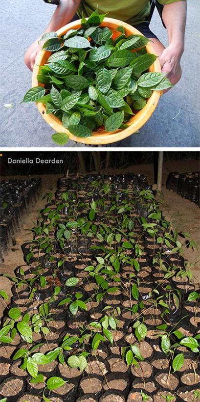 Plantas Vivero