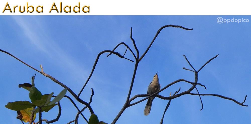 ArubaAlada