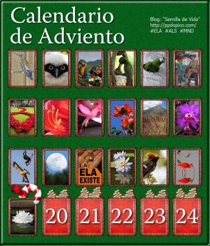 Calendario de Adviento día 19 Victoria amazónica, Foto Enrique Ascanio, Jardines Acuáticos Miguel Castillo (UCV)