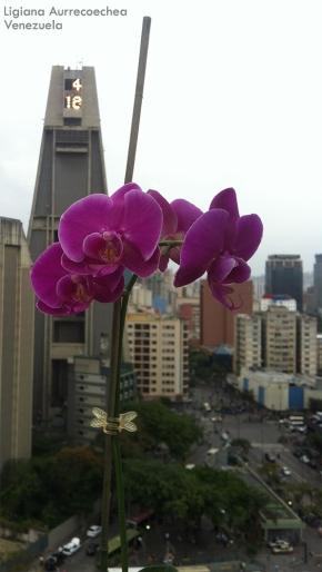 Foto® Ligiana Aurrecoechea (Venezuela): Phalenopsis, contraste con el cielo gris de Caracas.