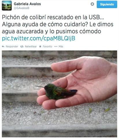 @GAvalosB01