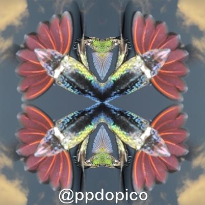 Simetria2016 0521 9667Nº01sdv