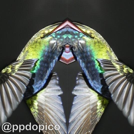 Simetría#016Nº04sdv