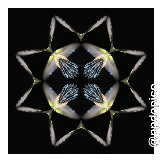 simetria2016-0817-6418no07csc-28x28